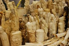 France Will Crush Ivory Stockpile, Rest Of Europe Urged To Follow