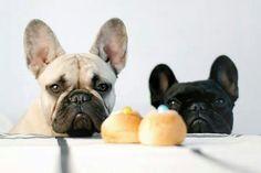 Tu crois qu'ils sont pour nous ces gâteaux ???