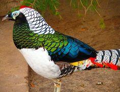 Aves Exóticas,lindão,curtam...........