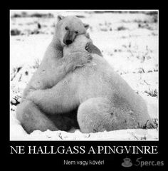 Image tagged in polar bear hug Funny Animals, Cute Animals, Animal Fun, Animal Pictures, Learning To Relax, Babe, Pet Birds, Pet Dogs, Doggies