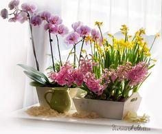 (1) Uma Flor para cada Amiga