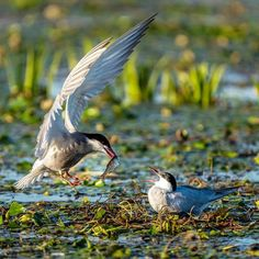 Danube Delta Wildlife Watching - The Adventures of Kiara Yew Danube Delta, Beautiful Places, Beautiful Pictures, Visit Romania, Romania Travel, Amazing Sunsets, Bucharest, Bird Species, Best Cities