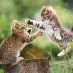 Katzenkrallen – Werkzeug und Waffe in einem