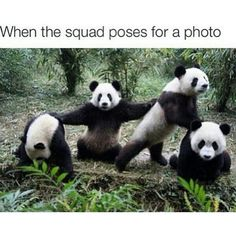 Today is National Panda Day.Get your laugh on to these 22 Funny Panda Pictures! Niedlicher Panda, Cute Panda, Panda Meme, Panda Bears, Panda Funny, Animal Memes, Funny Animals, Cute Animals, Funny Cute