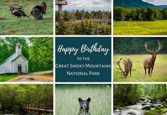 Great Smoky Mountains National Park Happy Birthday Smoky Mountains Hiking, Great Smoky Mountains, Laurel Falls, Most Visited National Parks, Forest Trail, Mountain Vacations, Tennessee Vacation, Cades Cove, Smoky Mountain National Park
