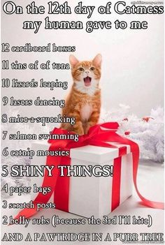 cute kittens with funny quotes cute cats and pets I Love Cats, Cute Cats, Funny Cats, Funny Animals, Cute Animals, Animals Images, Funny Humor, Funniest Animals, Animal Funnies