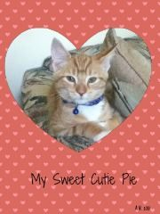 my Sweet Cutie Pie for Valentines Day