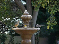 Birds bathing in the sunlight @ Budmarsh Country lodge