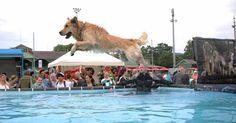 Open Air für Hundefreunde in Österreich auf der Trabrennbahn Baden. Foto:  EXOTICA Veranstaltungen /Pixelnerd Open Air, Goats, Animals, Dog Day, Bathing, Animales, Animaux, Animal, Animais