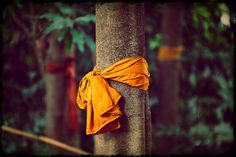 """Sacred Grove"" won the ""Conservation"" category of Dragonfly's first photo contest. 7th grade teacher and GFP student Nickele Morgan, who lives in Colorado, submitted this photo of a sacred tree, blessed by the Buddhist monks of Wat Sukato, Chaiyaphum Province, Thailand, 2013."