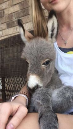 High Schooler Becomes 'Mom' To Tiniest Donkey Who Needed A Friend - The Dodo Baby Donkey, Cute Donkey, Mini Donkey, Baby Cows, Baby Elephants, Elephant Baby, Baby Baby, Cute Little Animals, Cute Funny Animals