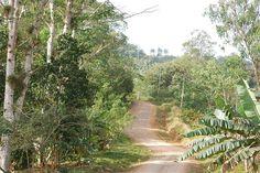 Forest track, Topes de Collantes, Cuba