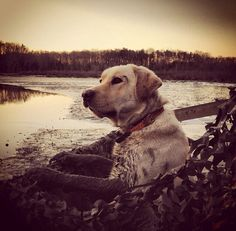 Duck hunting ♡