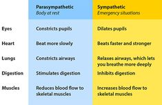 The sympathetic and parasympathetic systems usually have opposite effects on the same organs.