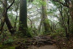 ¿Cómo compiten los árboles en el bosque para sobrevivir? Hay tres criterios: la densidad de la madera, la altura máxima que consiguen y la relación entre el peso y el grosor de las hojas