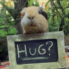 hug, as if that needs to be a question - of course, HUG!