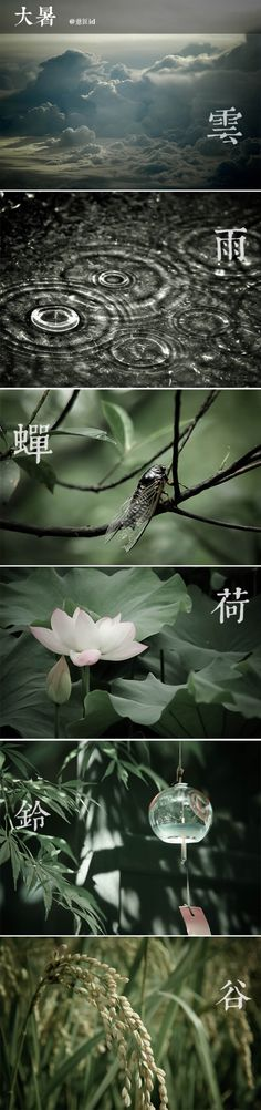Chinese season - Da Shu (hot summer) 大暑