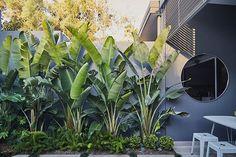 A courtyard garden haven 😌. A courtyard garden haven 😌.