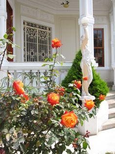 Rosas naranjas-amarillas