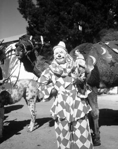 Ringling Circus clown Charlie Bell and his pet fox terrier with a camel.