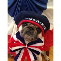 My adorable US friend Spanky showing his Patriotic Pride! .@spankythepug | Let the games begin! Go USA!!!!  at home the Puglets will be barking for Canada ;)