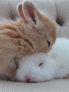 Cute baby animals, baby animals и cute baby bunnies. Cute Baby Bunnies, Cute Kittens, Funny Bunnies, Cute Babies, Baby Animals Pictures, Cute Animal Pictures, Cute Little Animals, Cute Funny Animals, Fluffy Animals
