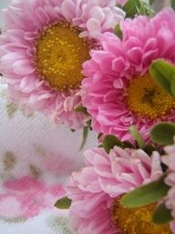 Pink sunflowers...I want these!!!!!    They're called Matsumoto Asters and are about the same size as Daisies.