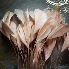 Blush Pink Stripped Coque Feathers Pink Love, Pretty In Pink, Pink And Gold, Rose Gold, Coque Feathers, Pink Feathers, Blush Roses, Blush Pink, Mauve