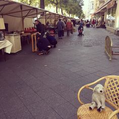 For the flea market & antiques lovers among you: Today the ANTIKMEILE is happening in Berlin (Suarezstr.). Let's see what Miss Stanhope brings home today... . . #antikmeile #suarezstrasse #schnüffelnohneende #fleamarket #dogsofberlin #fluffylove #kuscheltierliebe #berlinstyle #plushiesofinstagram #lovelaughlobilat