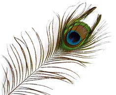 Peacock-Feather-PNG-image.png (1230×1012) | PAVÃO | Pinterest ...