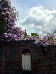 Hampstead See It, Plants, Flora, Plant