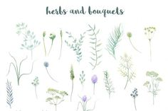 Watercolor Wild Herbs by Spasibenko Art on @creativemarket