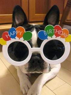 Happy Birthday! Celebrate in style just like this fun loving pooch