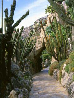 Monaco Exotic Garden, Monte Carlo, Monaco