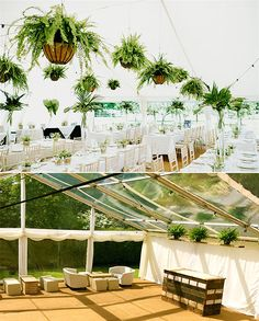 Photo of a beautiful wedding tent with baskets of foliage hanging from the roof Marquee Wedding, Tent Wedding, Wedding Reception, Hanging Ferns, Hanging Baskets, Wedding Decorations, Table Decorations, Hanging Decorations, Roof Panels