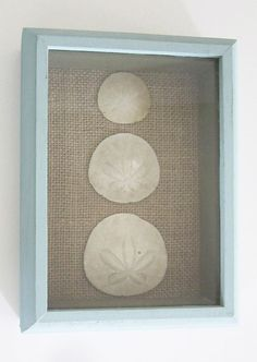 Chalk Painted Shadow Box with 3 Sand Dollars by PoppingShrimp, $10.00