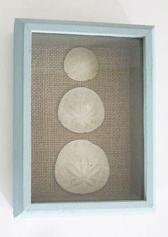 Sand Dollar Dove Seashell Shadow Box Tropical Bathroom