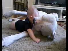 Gentle dog and baby share tender moment (VIDEO) » DogHeirs | Where Dogs Are Family « Keywords: Dogo Argentino, Baby, cuddle
