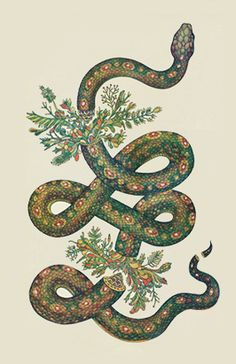Snake and branch