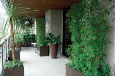 quintal com plantas em vasos