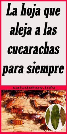 La Hoja Que Aleja A Las Cucarachas Para Siempre Hoja Cucarachas Laurel Casa Hogar Home Remedies Food Remedies