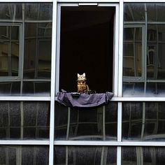 Purrfect view: A cat sits on the window sill of a modern building in the French city of Toulouse, February 7th 2017. 