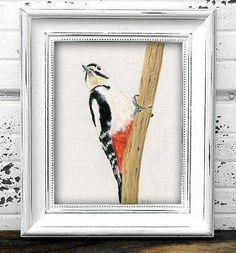 Woodpecker Original Pastel Drawing/Illustration  Bird Art