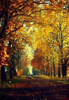 So ready for autumn!