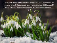 The steadfast love of the Lord never ceases: God's mercies never come to an end; they are new every morning: your faithfulness, O Lord, is great. ~ A New Zealand Prayer Book, He Karakia Mihinare o Aotearoa
