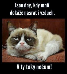 Super Funny Sayings And Quotes Humor Grumpy Cat Ideas Funny Couples Memes, Super Funny Quotes, Funny Quotes For Teens, Funny Sayings, Funny Baby Photography, Funny Supernatural Memes, Relationship Jokes, Funny Animals With Captions, Work Jokes