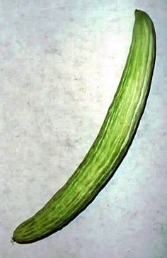 Kyoto Yard Long Cucumber 10 Seeds -Longest in the World