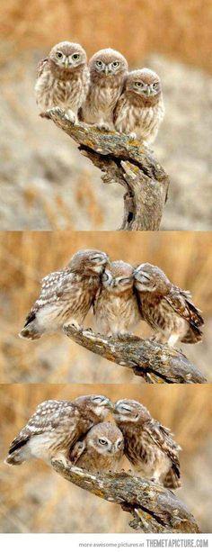 Forever Alone Owl…
