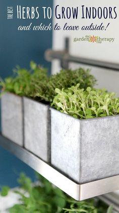Herbs are outdoor plants. There are many plants that can grow well as houseplants, but herbs are not among them. But that doesn't mean that you shouldn't choose certain herbs to grow indoors. This article covers which herbs to grow indoors as well as some that you should leave outside. Once you have your list head over to get a ...