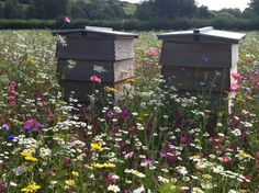 beehives and wildflowers really attract the bees! Plant wildflowers in large fields instead of grass!